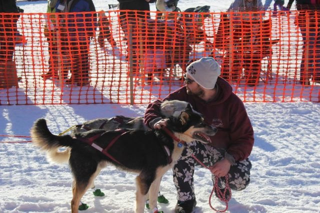 Musher Handler with Lead Dogs