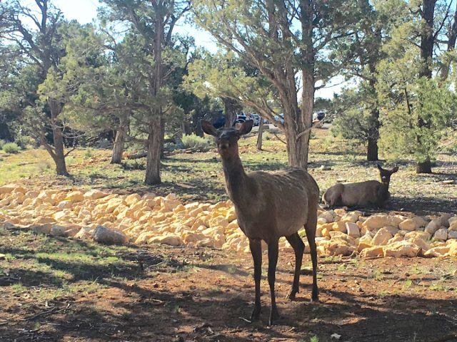 Grand Canyon Locals